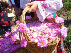 Cities producing rose petals and rose buds,Countries producing rose petals and rose buds,dried rose petals wholesale,bulk rose petals,wholesale rose petals,rose water wholesale suppliers,rosewater wholesale,rosa damascena,dried rose petals