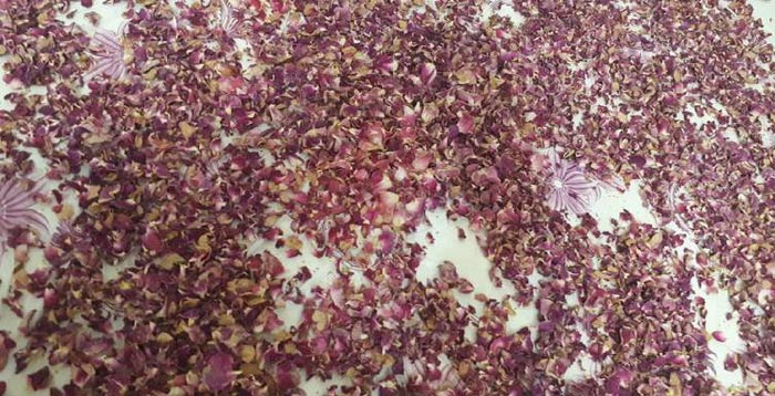 Drying methods of rose petals and rose buds,dried rose petals wholesale,bulk rose petals,wholesale rose petals,dried rose buds,rosa damascena,rose flower petals