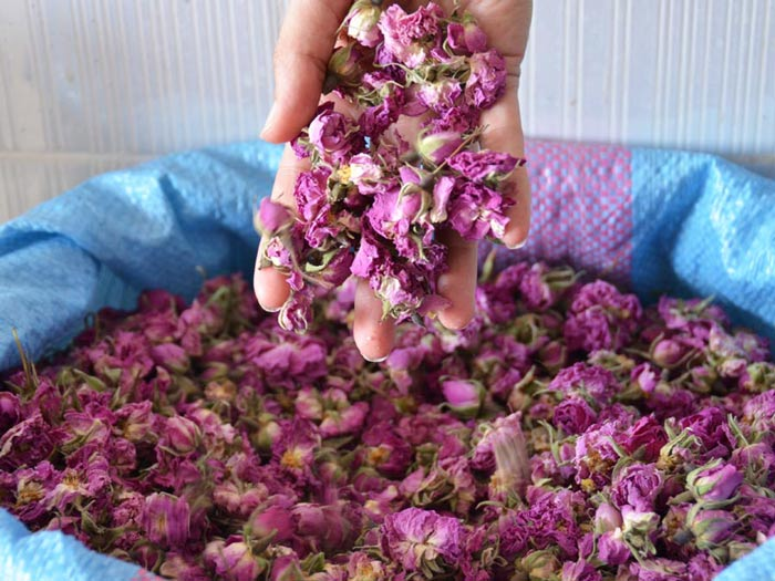 dried rose buds bulk, dried rose petals wholesale, bulk rose petals, wholesale rose petals, rose buds, rose petals, dried rose petals, dried rose, dried rose buds, damask rose, rosa damascena, rose flower petals