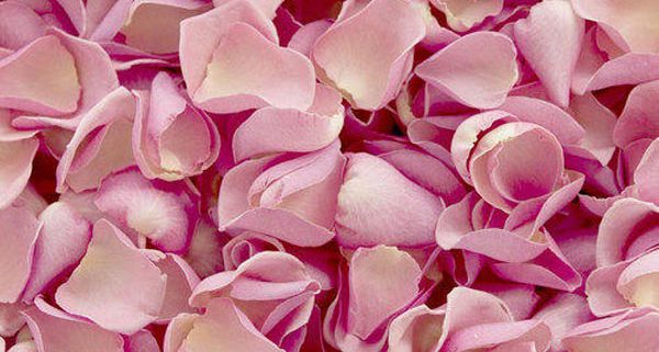 certificate natural organic rose buds,buy bulk rose petals, buy bulk rose petals wholesale, buy rose petals, wholesale buy rose petals, rose buds, rose petals, dried rose petals, dried rose, dried rose buds, damask rose, rosa damascena, rose flower petals,wholesale rose petals